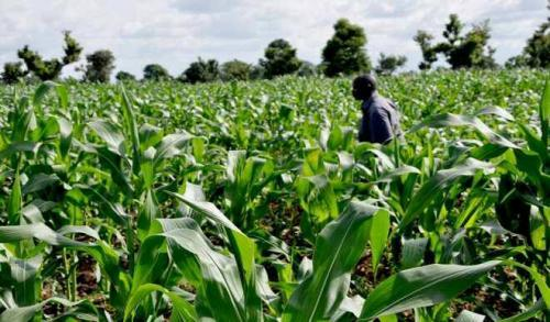 Farmers in Borno smile to bank as security situation improves