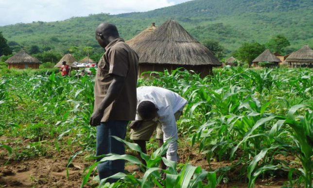 Maize, soya beans farmers to benefit from N3.5bn fund in Ekiti