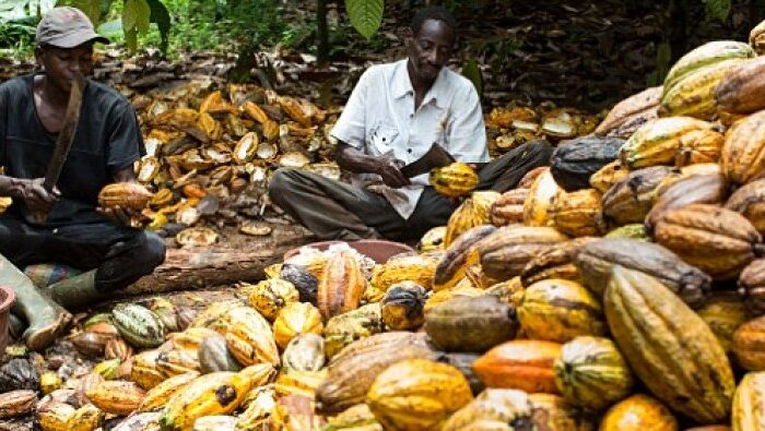 CRIN canvasses rehabilitation of cocoa industry to improve Nigeria's economy