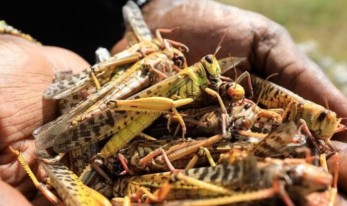 APOJoint communiqué on the critical desert locust situation and emergency response in Somalia